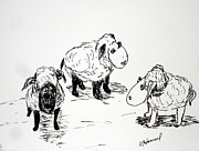 Trio Drawings Posters - Sheep Trio Poster by Vicki  Housel