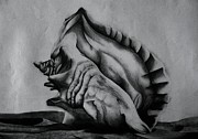 Seashell Drawings Metal Prints - Shell By The Sea Metal Print by Kishwayne Hill