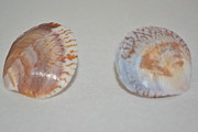 Tie Pin Framed Prints - Shell Cuff Links Framed Print by Bryce  Hendricks