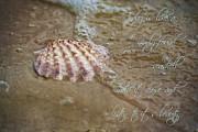 Regina  Williams  - Shell on beach