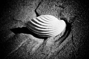 Sea Pyrography Prints - Shell on Sand black and white photo Print by Raimond Klavins