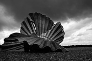 Mark Tripp - Shell on the Beach