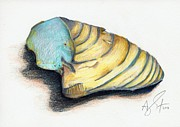 Colored Shell Prints - Shell Print by Troy Argenbright