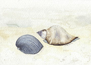 Sea Shells Painting Posters - Shells Poster by Amanda Makepeace