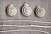 Collection Prints - Shells and Sticks Print by Carol Leigh