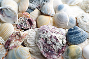 Seashell Digital Art Mixed Media Prints - Shells From The Sea Print by Andee Photography