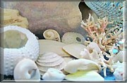 Nature Study Digital Art Posters - Shells In Pastels Poster by Danielle  Parent