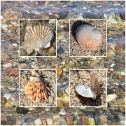 Beach Theme Framed Prints - Shells in Warm Water Framed Print by Carol Groenen