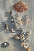 Birdseye Painting Posters - Shells on a Sandy Beach Poster by Nick Payne