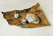 Seashell Picture Metal Prints - Shells On Paper Metal Print by Horst Braun