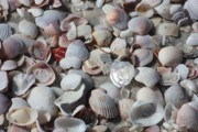 Beach Theme Decorating Metal Prints - Shells on Treasure Island Metal Print by Carol Groenen