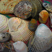 Shell Texture Posters - Shells Shells and More Shells Poster by Cathy Lindsey