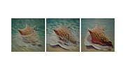 Seashell Picture Metal Prints - Shells Triptych Metal Print by Don Young