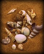 Diane Reed - Shells2