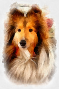 Dog Portrait Digital Art Originals - Sheltie by Betsy Cotton