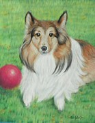 Ball Pastels - Sheltie Collie by Ace Robst Jr