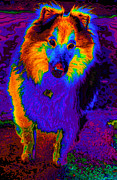 Collie Digital Art Posters - Sheltie pop art Poster by Eti Reid