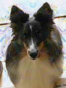Puppies Digital Art Metal Prints - Sheltie Metal Print by Stuart Turnbull