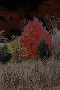 Carolyn Stagger Cokley - shenandoah autumn2
