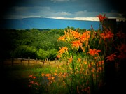 Shenandoah Valley Posters - Shenandoah Lilies Poster by Joyce  Kimble Smith