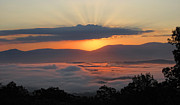 Shenandoah Valley Posters - Shenandoah Morning Sunrise Fog  Poster by Lara Ellis