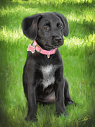 Black Lab Digital Art Framed Prints - Sheprador puppy Framed Print by Dale Jackson