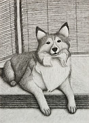 Sheepdog Drawings - Shetland Sheepdog by Jeanette Kabat