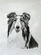 Sheepdog Drawings - Shetland Sheepdog by Terri Mills