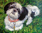 Toy Breeds Posters - Shih Tzu Dog Portrait Poster by Enzie Shahmiri