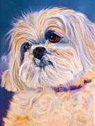 Topknot Framed Prints - Shih Tzu Rescue Framed Print by Susan A Becker