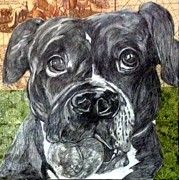 Pit Bull Mixed Media Metal Prints - Shikko Metal Print by Ashley Reign