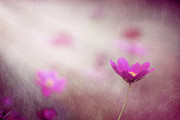 Flower Photography Prints - Shine On Me Print by Amy Tyler