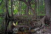Chris Kusik Framed Prints - Shingle Creek I. Framed Print by Chris  Kusik