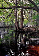 Chris Kusik Framed Prints - Shingle Creek II. Framed Print by Chris  Kusik