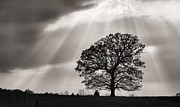 Fauquier County Photos - Shining Down by JC Findley
