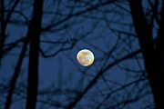 Man-in-the-moon Prints - Shining Through Print by Steve Ratliff