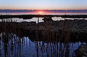 Pink Sunset Posters - Shooting Mangroves at Dawn - Key Biscayne Florida Poster by Matt Tilghman