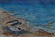 Tern Originals - Shorebird II  by Phyllis Barrett