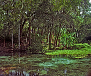 Dunnellon Photos - Shoreline. Rainbow Springs. by Chris  Kusik