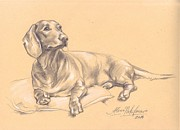 Alena Nikifarava - Short-haired dachshund...