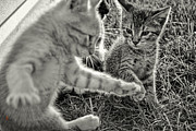 Kittens Photos - Show Off by Adam Vance