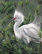 Bird Pastels Prints - Show off Print by Deb LaFogg-Docherty