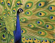 Peacock Pastels Metal Prints - Showoff - Peacock Painting Metal Print by Prashant Shah