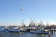 Lynn Jordan - Shrimp Boats at Joe...