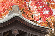 Fall Leaves Acrylic Prints - Shrine Roof and Autumn Leaves Arashiyama Kyoto Acrylic Print by Colin and Linda McKie