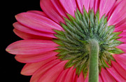 Flower Photos - Shy Flower by Dan Holm