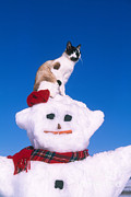 Alan and Sandy Carey - Siamese Cat On Snowman