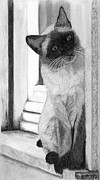 Siamese Cat Print Framed Prints - Siamese Cat on the Window Sill Framed Print by Sarah Dowson