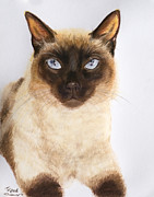 Burmese Pastels - Siamese Cat over White by Kate Sumners