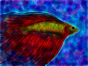 Betta Prints - Siamese Fighting Fish Ii Print by Anita Lewis